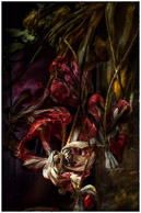 In Our Own Landscape, dead flowers
