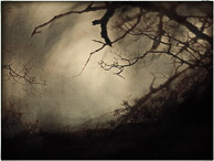 overhanging branches,night scapes