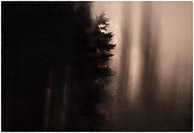 dark and light with tree shape,night scapes