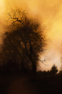tree with yellow background,night scapes