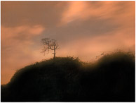 small tree on hill,night scapes