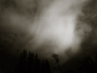 light sky with tree tops,night scapes