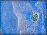 green leaf on blue snow